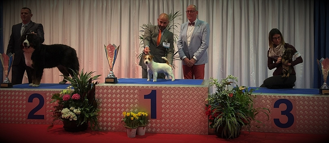 94th INTERNATIONAL DOG Show LUXEMBOURG