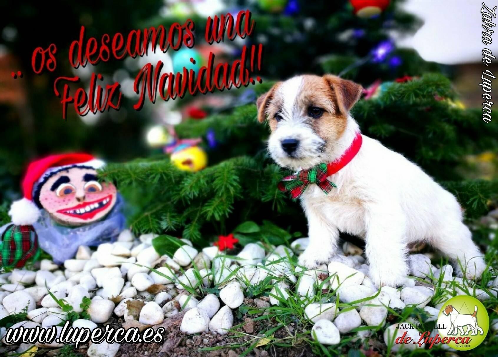 ..desde Luperca Les Deseamos Unas Felices Fiestas Y FELIZ NAVIDAD!!